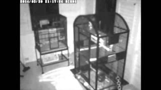 Poltergeist Orb Activity Caught on Camera-30MAR2014-NQGHOSTHUNTER
