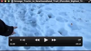 Strange Tracks in Newfoundland Trail Possible Bigfoot Tracks Breakdown