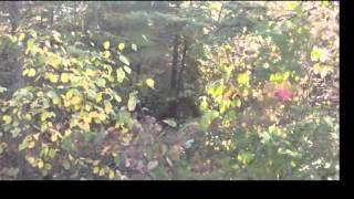 Bigfoot Sasquatch Sighting near Ashigan Lake, BWCA 2012 Breakdown