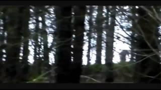 Bigfoot On The Hill footage Breakdown
