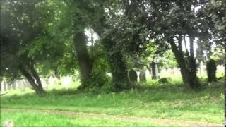Mitcham Common Daytime Iive/Croydon cemetery  15/5/2015 Part 3 of 4