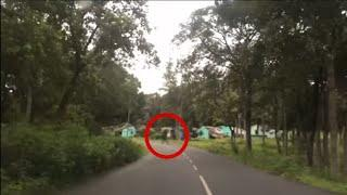 Real Ghost Videos | Ghost In Forest Caught On Camera | Haunted Road | Scary Videos