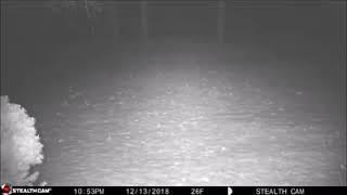 Apparition d un  orbe en pleine forêt