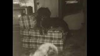 Paranormal Phenomena - The Unexplained: Hauntings - Paranormal Documentary