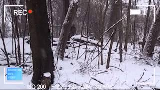 Bigfoot In Brooklyns Prospect Park Urban Bigfoot Sighting Breakdown