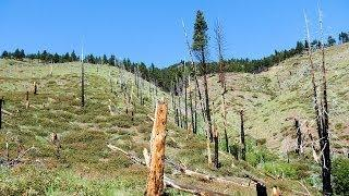 "Kings Canyon Nevada - Part 10 ""Burnt Forest"""