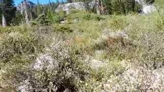 "Mount Tallac - Part 5 ""The Dense Path To Cathedral Peak"""