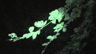 Epping Forest Ghost Hunt Pt6