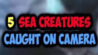 5 REAL SEA MYTHS SPOTTED IN REAL LIFE and CAUGHT ON CAMERA