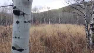 Bigfoot Sighting Alpine Loop Utah Send in Breakdown