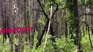 Tracking Bigfoot With Ken Part One. Alabama Cryptozoology Footage