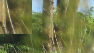 Locust Tree Green Men