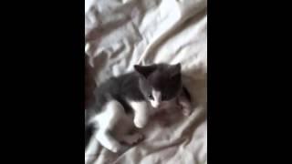 Cute Funny Epic Cat!!!