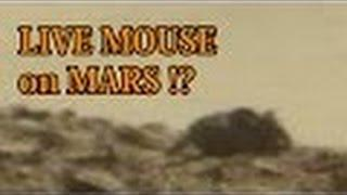 Mouse Caught On Camera On MARS | Real Alien Picture Of Life On Mars 2016