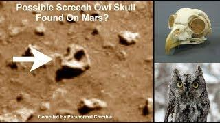 Possible Screech Owl Skull Found On Mars?