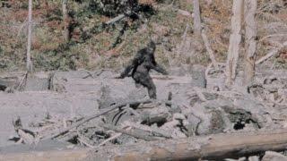 Dossier Bigfoot numéro 2: Sasquatch