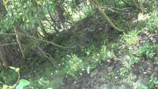 "Flume Trail Part 5 ""Broken Branches and a Strange Deep Track"""