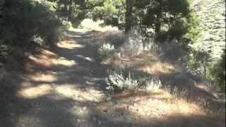 "Sierra Canyon & Genoa Peak - Part 2 ""When Desert Becomes Forest"""