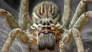 10 Tales Of Creepy Crawlies From Myth And Folklore | Documentary