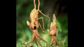 Criaturas perdidas RINOGRADOS Criptozoologia @OxlackCastro