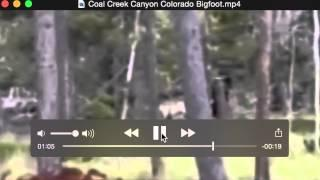 Coal Creek Canyon Colorado Bigfoot? Breakdown