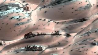 Nasa photographs 'trees' on Mars