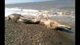 What is this 'mysterious sea creature' that washed ashore