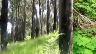 Yowie Bigfoot Caught on Film? Breakdown