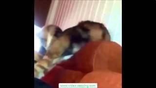 Epic cat videos - los videos de gatos mas epicos