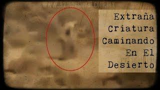 Increíble: Extraña Criatura grabada en Estados Unidos (Video Paranormal)
