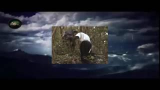 Destination Truth S01E03 Ropen and Chupacabra