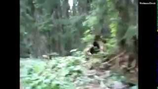 Sasquatch Possibly Caught On Tape in Slovenia? (2005 Video)