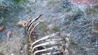 """Johntown NV and Gold Canyon - Part 10 """"Oh Deer"""""""