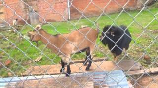 """The Bayley House Part 1 """"Just Some Horny Ole' Goats Guarding History"""""""