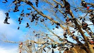"Cold Springs Nevada -  Part 1 ""The Infamous Shoe Tree"""