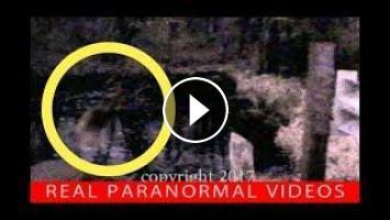 DOGMAN or FROGMAN? Strange Creature caught on camera  Real or Fake?