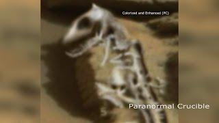 Dragon Fossil Found On Mars?