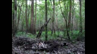 Camping In The Swamp With Sciatic Nerve Damage Part 3