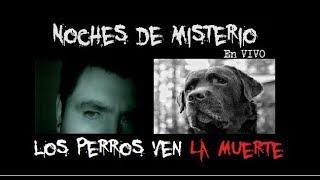 Noches de Misterio en Vivo - Los Perros ven y predicen La Muerte ?