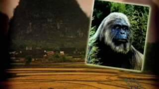 Bigfoot Sightings & Evidence Part 1
