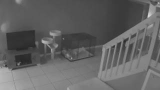 паранормальное явление (cat version)