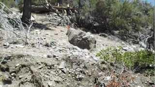 "Sierra Canyon & Genoa Peak - Part 11 ""Revealing Jobs Peak From Afar"""