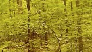 Chasing Bigfoot Sasquatch Raw Video Breakdown