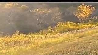 The Craven Bigfoot Footage - Bigfoot Saskatchewan Breakdown