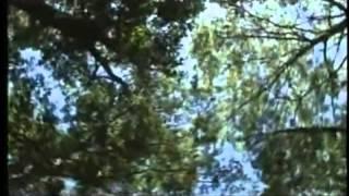 Monsterquest - Demonio de Jersey (3 de 5)
