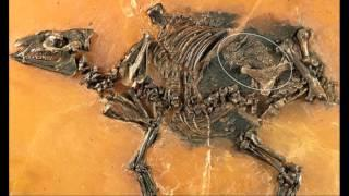 Unborn 'horse' discovered STILL INSIDE its womb 48 million years after the mother died