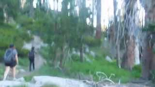 """Shaelor Lakes - Part 1 """"Into The Woods We Go"""""""