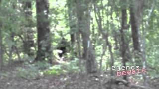 Bigfoot Stealing Livestock Breakdown
