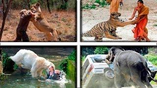 9 Bizarras Ocasiones donde Animales Asesinaron Humanos por Venganza