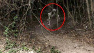 OMG | Terrific Video Caught on Camera | Creepy Creature In A Forest